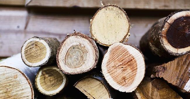 sushka-drevesiny